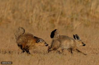 Kgaladi - Pecking order activity