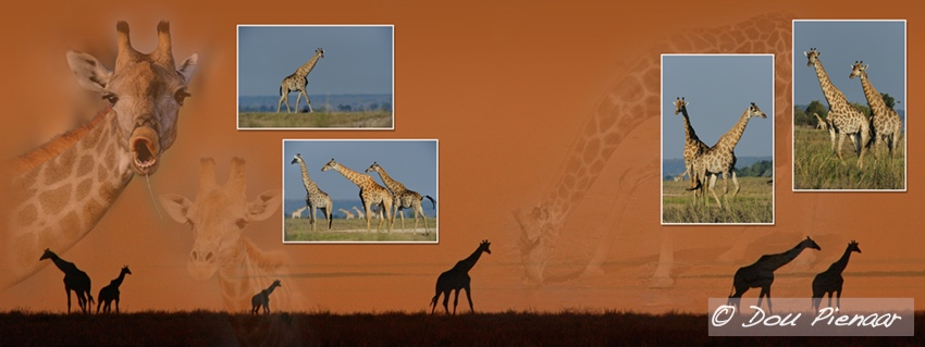 Giraffe collage