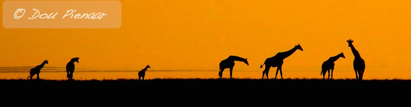 Etosha Namibia - Silhouette Giraffe