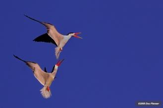 Airial Skimmer battle
