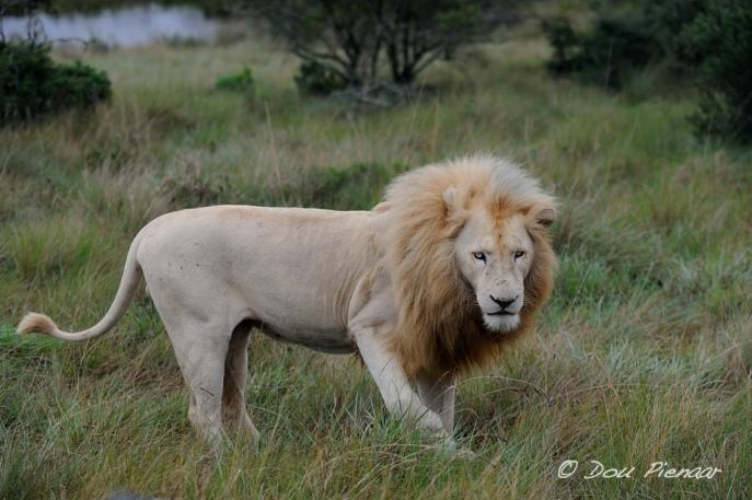 Beautiful White Male - Pumba