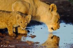 Mom and Cub - Ngorongoro crater Tanzania