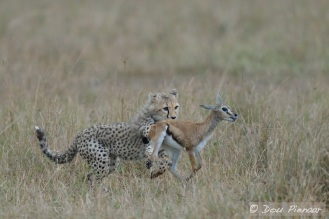 The Cub catches up with the Fawn but is not sure what to do.