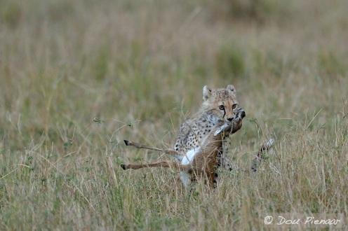 Instinctively moving the prey!
