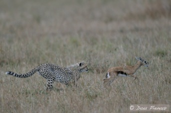 Full speed from the Cub.