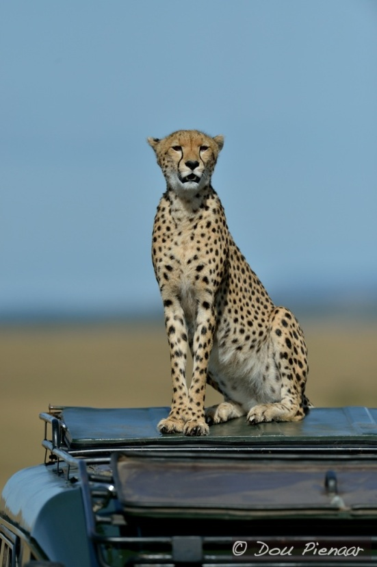 Proud, vigilant, innovative and diligent Cheetah mother!