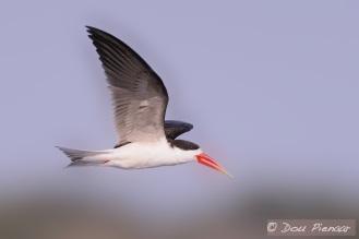 Skimmer flight