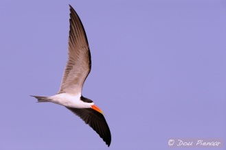 Effective wingspan