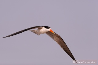 Focused flight