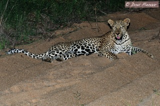 Sabi Sabi Night Shot