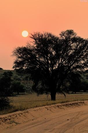 Kgalagadi last light