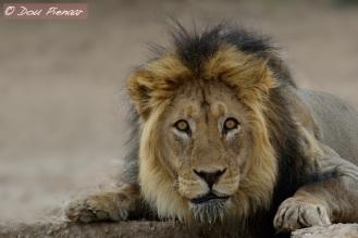 Lion Waterhole