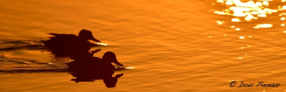 Golden Hour Teals