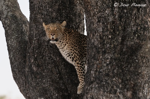 Peeping through the main stumps of the tree