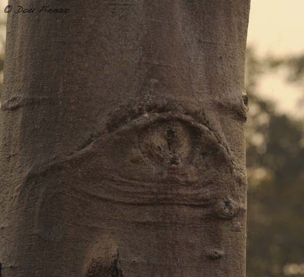 Natures Eye in a tree