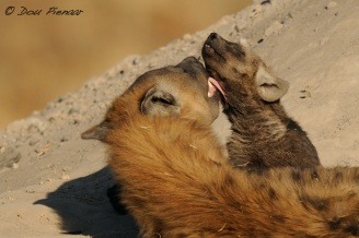 Motherly grooming