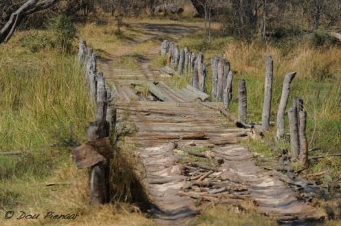 African Bush Bridge