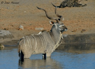 It is now or never for the Kudu...