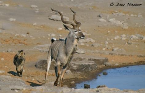 Kudu is making ground...