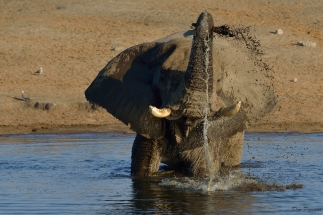 Elephant Shower Time