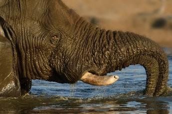 Elephant water fun