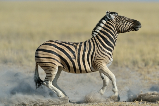 Zebra Power